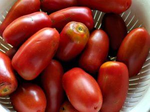 サンマルツァーノリゼルバでドライトマトづくり